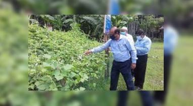 নিরাপদ শিম উৎপাদন শীর্ষক মাঠ দিবস অনুষ্ঠিত হয়েছে নকলায়