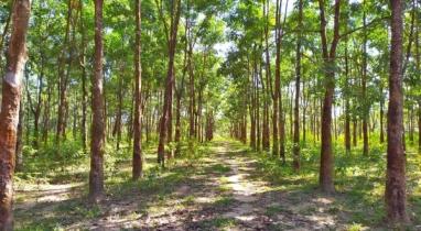দর্শনীয় স্থান: এশিয়ার বৃহত্তম রাবার বাগান