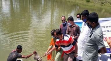 মোরেলগঞ্জে মাছের পোনা অবমুক্তকরণ কর্মসূচী পালন করেছে মৎস্য অধিদপ্তর
